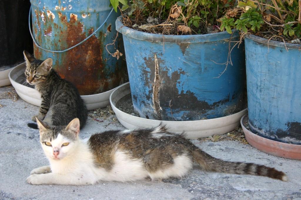 Santorini 2011 011