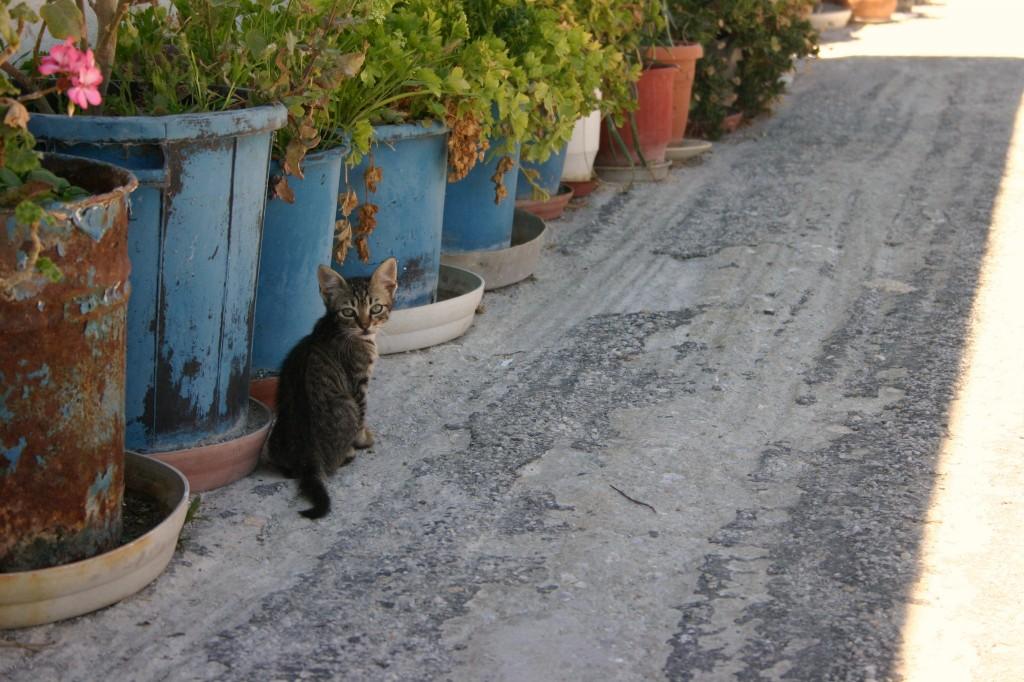 Santorini 2011 013