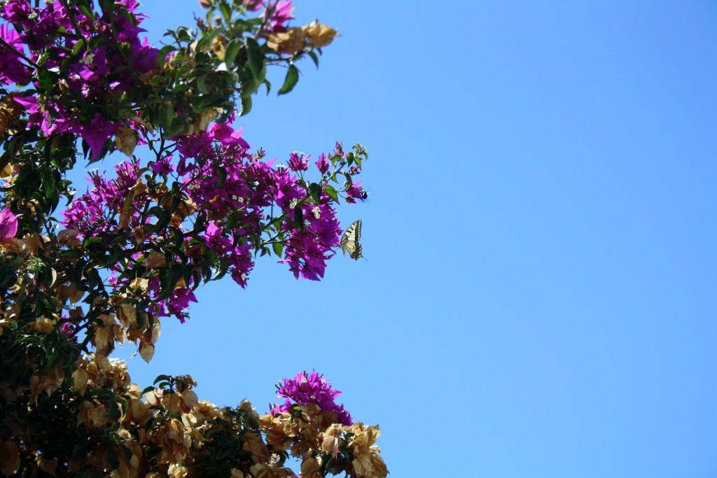 Santorini 2011 606