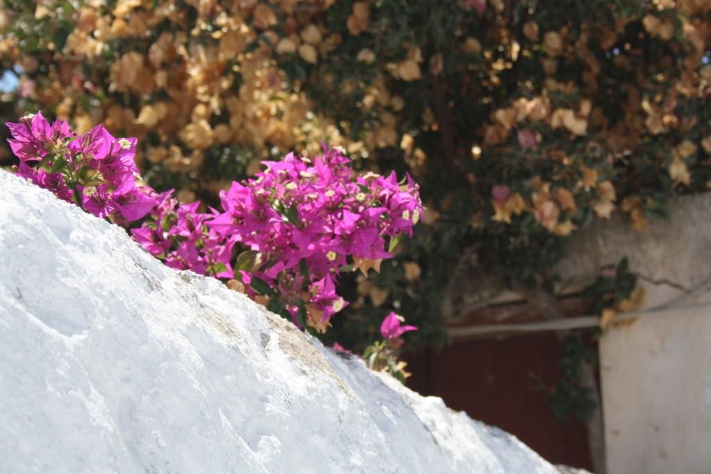 Santorini 2011 623