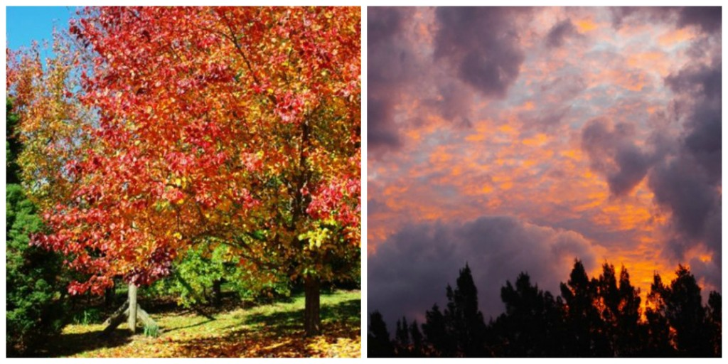 autumncollage