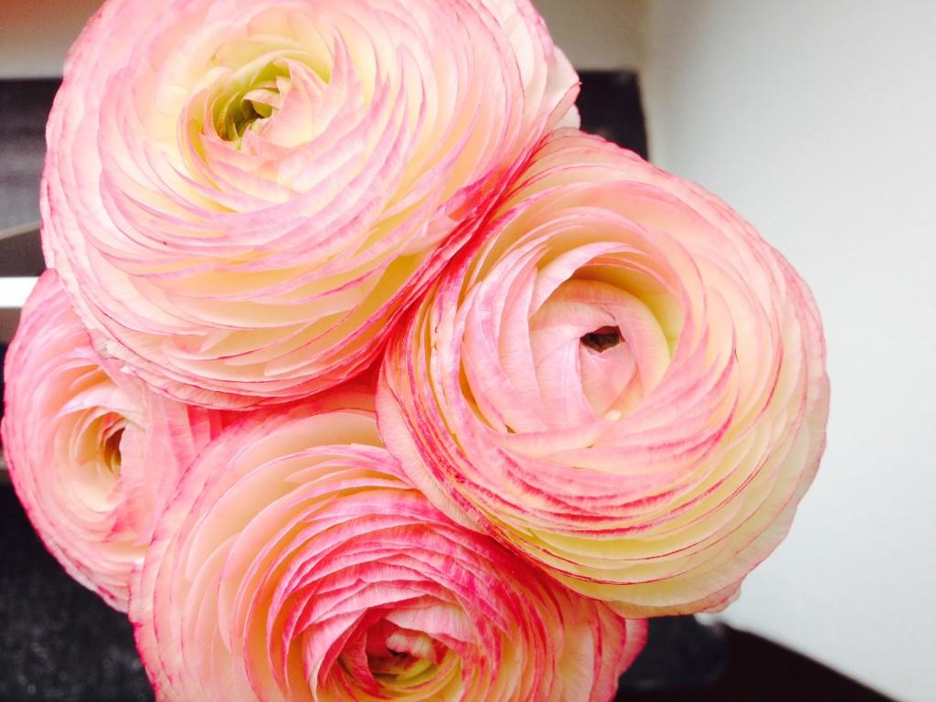 Housewarming flowers.