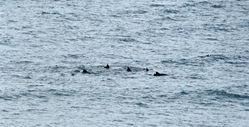 dolphins2